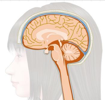 脳005.jpg